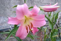 As flores da minha mãe