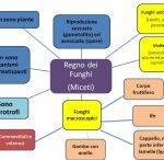 Mappe concettuali - Scuola