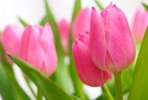 Wiosna w Siedlisku na Wygonie / Wiosenne kwiaty
