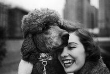 Poodles: Poodles and people 3 / by Lynne McLawhorn