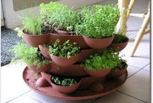 herbs / by Bbjo -Loving Life