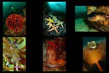 Championnat de France 2014 / Championnat de France de photo subaquatique en mer 2014 Camaret sur Mer