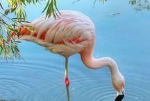 Flamingos / Pink Flamingos