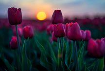 Flowers 1 *