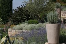 {Precedent} Mediterranean Garden