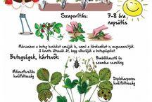 Kinder Garteningenior