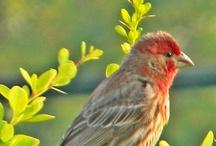 Backyard Birdwatching