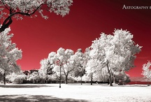 Artography by Tracy / Infrared
