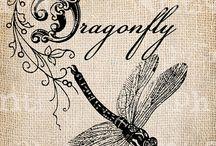 Dragonfly Chuồn chuồn