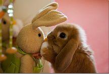 Animals :)*