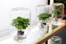 植物の栽培