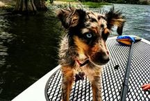 Outdoor Adventures with your dog / awesome adventures and how to prepare for them with your dog