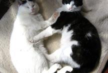 Pets / Die ganz speziellen und unverzichtbaren Freunde.