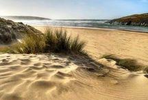 Beach / Wydma