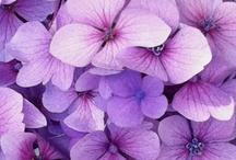 Color It Purple