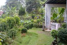 Berkebun dan bertaman / Informasi seputar dunia pertanian mulai dari berkebun di rumah sendiri, membuat taman, hingga pertanian dan perkebunan modern