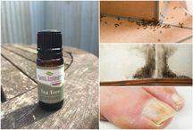 Essential Oils & Aromatherapy