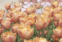 Fleurs / Quelques clichés de plus belles fleurs, au fil de mes balades & découvertes.  Copyright Ambrefield Photo
