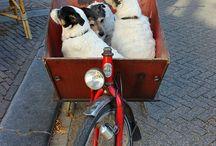 Dog + Kid Bike