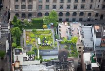 Urban Garden Designs / One Day is one day