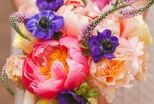 Flowers and colours