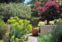 Medditerranean garden_ideas / Inspirations of medditerranean style gardens