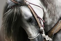 The Divine Equine / by Ami White