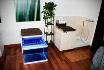 Fish spa / Fish spa installé et entretenu par #Aquarium Services France #fishspa #garrarufa #fishmassage #massagedespieds