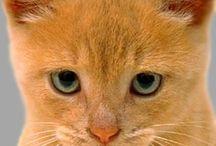 Cats / by Inglesa Maserati