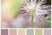 Color Palettes / by Beverly Wolf