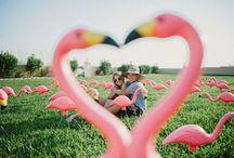 flamingo / inspiration