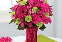 Every Day Flowers / Flowers that are perfect for every occasion!