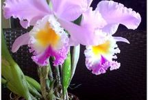 Egzotikus virágok