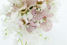 FLOWBULOUS / PHOTO & FLOWER by ATSUSHI TANIGUCHI  ww.illony.com  info@illony.com