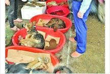 Dogs and Cats Meat Trade