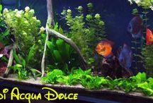 Pesci acquario acqua dolce | Freshwater fish