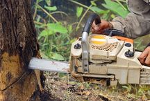 Tree Lopping Services in the Wollongong region and surrounding suburbs Advanced Mowing & Maintenance  0458366944