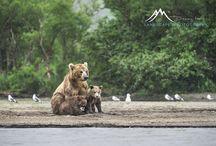 Wildlife / Photos of animals from around the world