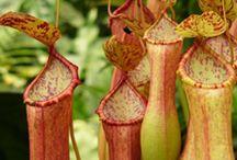 Plants...Cool Ones