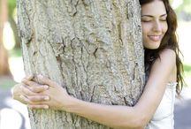 NRJ des arbres / L'arbre, cette prodigieuse source d'énergies