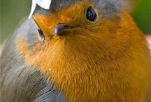 All Things Bird