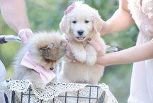 câini mici