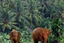 globerockin' Sri Lanka / Informiere dich über AIFS Freiwilligenprojekte in Sri Lanka: >>www.aifs.de