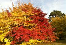 Herbstfarben / Einige unserer #Haferl passen wunderbar zu den Herbstfarben der Wälder, findet Ihr nicht auch!? www.haferl.com