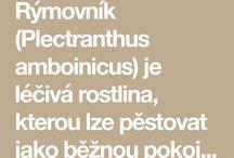Rymovnik