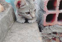 gatos #Michone.