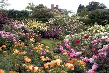 My Garden (I wish) / by Patricia Inman Huen