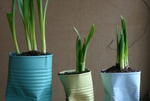 containers gardening