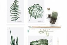 Botanical / Botanical illustrations, drawings, paintings, prints, etc.