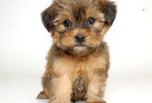 Puppies I Need
